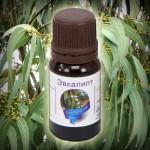 Свойства и применение эфирного масла эвкалипта