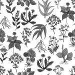Магические свойства и применение трав и растений